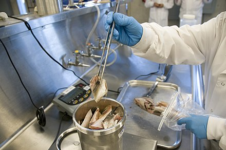 FDA lab tests seafood for microorganisms Seafood- FDA Lab 2881 (4494783228).jpg