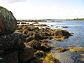 Seaweed and boulders - geograph.org.uk - 1589421.jpg