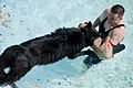 Security Forces conducts K-9 water training 130910-F-VH329-001.jpg