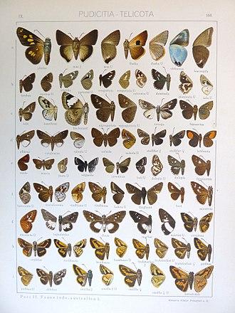 Idmon (skipper) - Image: Seitz 9Fauna Indo Australica Plate 168
