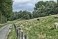 Sheep (48525581301).jpg