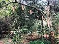 Sigiriya resort2.jpg