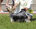 Silky Moletai May 2014 5.jpg