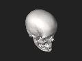 Skull 3D SR File Nevit Dilmen.stl