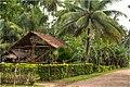 Small banana farm in Panglao - panoramio.jpg