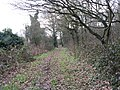 Small wood near the River Roding - geograph.org.uk - 110079.jpg
