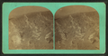 Snow Forest, from Robert N. Dennis collection of stereoscopic views.png