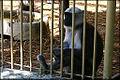 Sofia Zoo E7.jpg