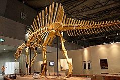 Altura media jirafa macho adulto