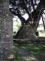 St Thomas Bedhampton, churchyard - geograph.org.uk - 1174728.jpg