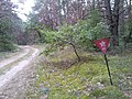 Star sign on a forest path - знак со звездой на лесной дороге - panoramio.jpg