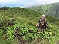 Starr-110722-7660-Polyscias oahuensis-habitat with Jupiter-Waihee Ridge Trail-Maui (24733783649).jpg