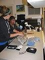 Starr-140625-4644-Eucalyptus sp-habitat with Corinna and Chris taking data on Hawaiian Hoary bat-Hawea Pl Olinda-Maui (25243668305).jpg