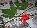 Starr 060905-8776 Passiflora vitifolia.jpg