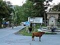 Stepantsminda, fontaine et vaches.jpg