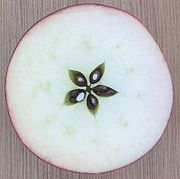Apple cut horizontally, showing seeds