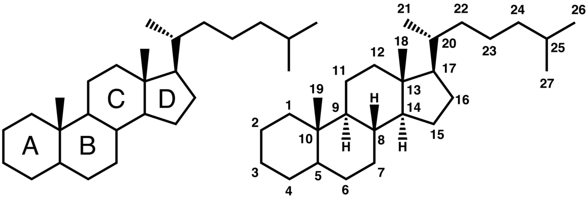 cyclopentanophenanthrene - Wiktionary