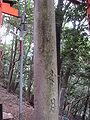 Stone dori in Fushimi Inari-taisha 10.jpg