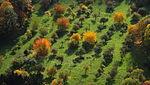 Streuobstwiese Siebengebirge, Luftaufnahme.JPG