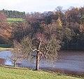 Studley Park Lake - geograph.org.uk - 1595386.jpg