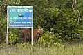 Sundarban tiger beside a signboard.jpg