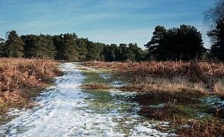 Sutton and Hollesley Heaths Suffolk Wildlife Trust nature reserve