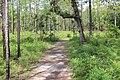 Suwannee River State Park Sandhill Trail 2.jpg