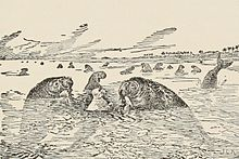On slightly yellow paper using black ink, there is Kotick the white seal with his arms protruding straight up out of the water. He is facing a sea cow who is darkly shaded, has large nostrils, small eyes, stocky body, and covered in seaweed. Behind Kotick is another sea cow who is eating seaweed, and in the background there are many other sea cows. One of the sea cows is sticking its tail out of the water, which resembles that of a dolphin. The coastline is visible to the right.