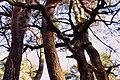 Tańczące drzewa - panoramio.jpg