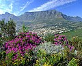 Table Mountain - South Africa (2418540968).jpg