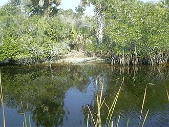 Tamiami Trail - Alligators are a common sight along the scenic Tamiami Trail from Miami to Naples.  Unlike its sister Alligator Alley, the trail is only one lane in each direction and has no fences to keep wildlife from traversing it.