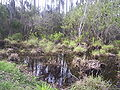Taylor lake, largo, florida 018.jpg