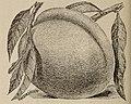 The Easterly Nurseries (catalog) (1898) (20384145019).jpg