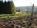 The Louran burn making its way downhill to the Palnure Burn - geograph.org.uk - 507298.jpg