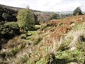 The O Brook valley - geograph.org.uk - 1531287.jpg