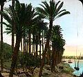 The Palm Fringed Nile (4904969324).jpg