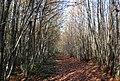 The Wealdway, Hurst Wood - geograph.org.uk - 1571658.jpg