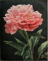 The book of the peony (1917) (20399189005).jpg
