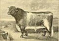 The breeds of live stock, and the principles of heredity (1887) (14778076191).jpg