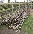 The laying of a traditional hedge (3b) - geograph.org.uk - 1750490.jpg
