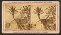 The oldest house, and date palm, St. Francis St., St. Augustine, from Robert N. Dennis collection of stereoscopic views 2.png