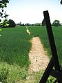 The path to Toft Monks - geograph.org.uk - 1335235.jpg