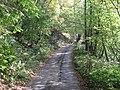 The track to Bog Farm - geograph.org.uk - 593250.jpg