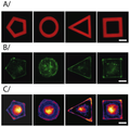 Thermoresponsive micropatterned substrates for single cell studies.png
