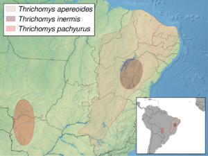 Punaré - Image: Thrichomys distribution (colored)