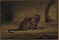 Tiger MET 29.100.577.jpg