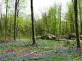 Timber stacks, West Woods, near Marlborough - geograph.org.uk - 789246.jpg