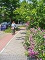 Toepchiner Weg - Radweg - geo.hlipp.de - 38679.jpg