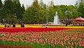 Tonami Tulip Fair 2019c.jpg