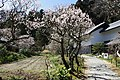 Toukeiji2011-0319-0111.jpg